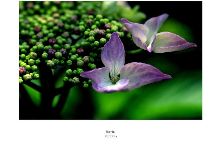 10 蝶の舞.jpg