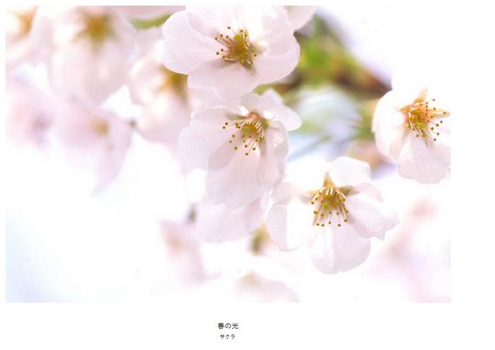 1 春の光.jpg