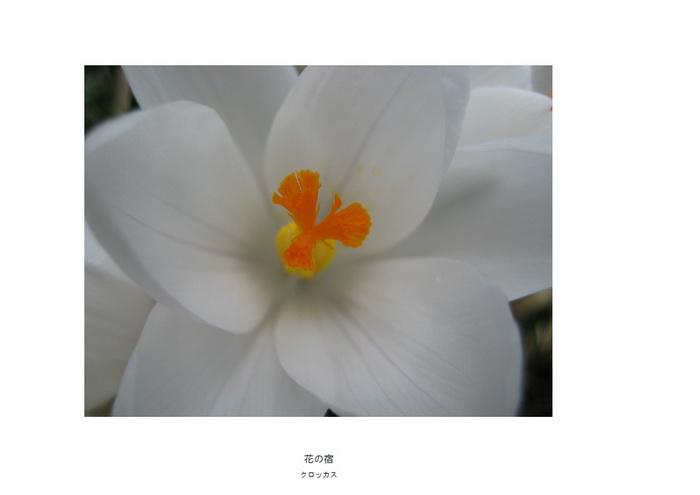 17 花の宿.jpg