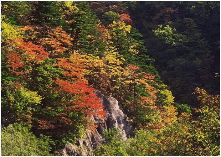 18 白神の秋.jpg