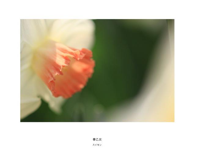 35 春乙女.jpg