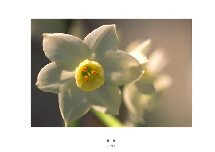 春光_サイズ変更.jpg